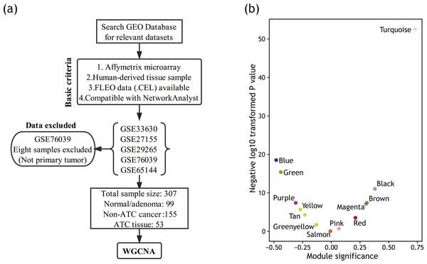 Module detection based on WGCNA.