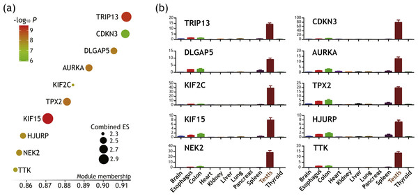 Identification of 10 genes with cancer/testis expression pattern as putative key genes of ATC harboring therapeutic potential.