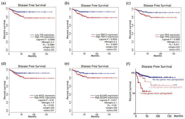 Putative key genes' impact on disease free survival (DFS) among differentiated thyroid cancer patients.