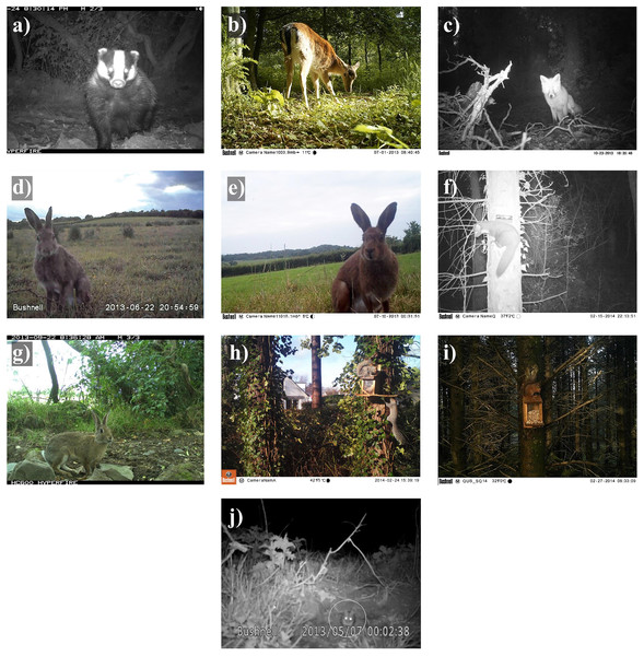 Camera trap images of 10 mammal species detected in Northern Ireland between 2013 and 2016.
