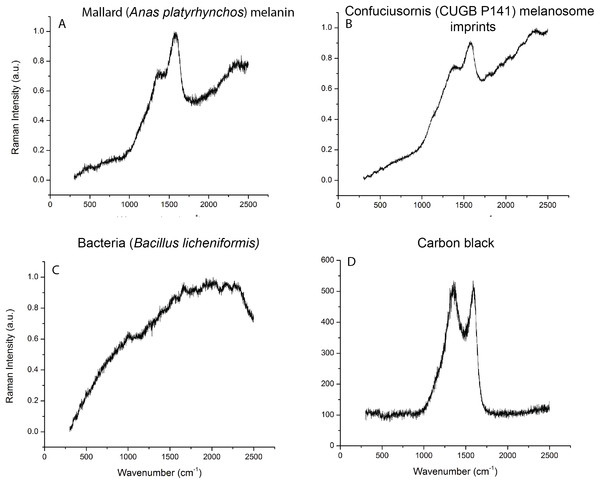 Raman spectroscopy data compared to melanin, keratin, and bacterial signatures.