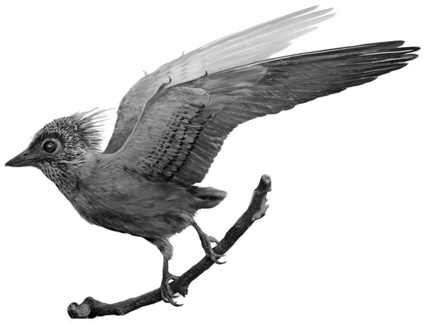 Reconstruction of the plumage in CUGB P140.