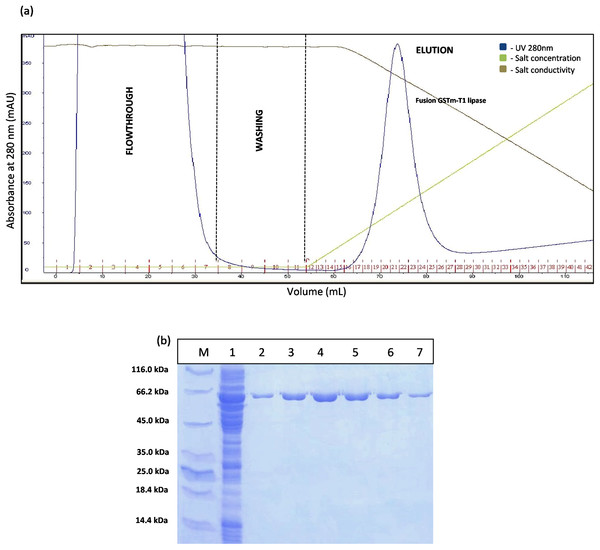 Chromatogram profile for affinity chromatography and SDS–PAGE analysis on eluted proteins.