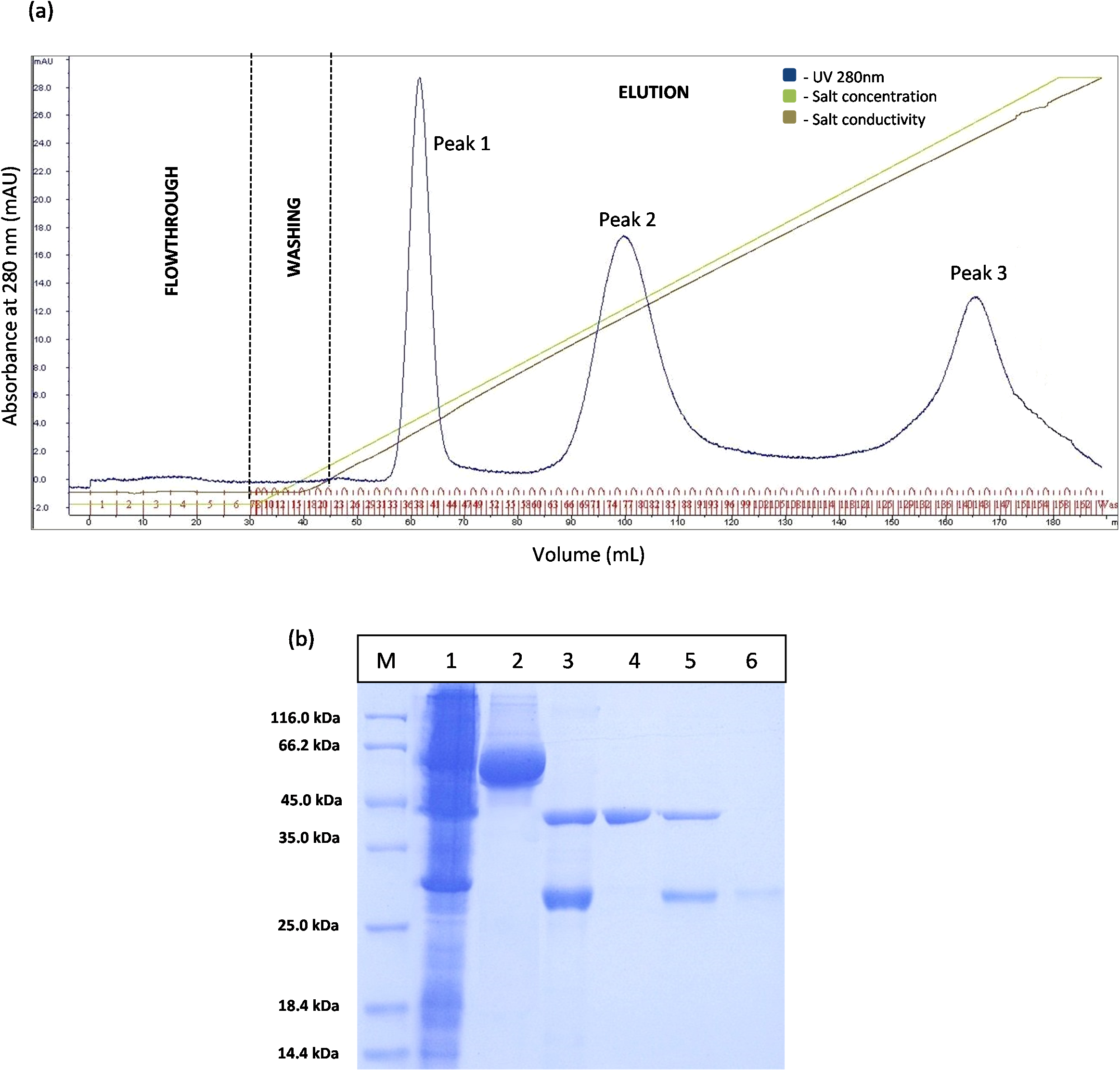 Enhancement of a protocol purifying T1 lipase through