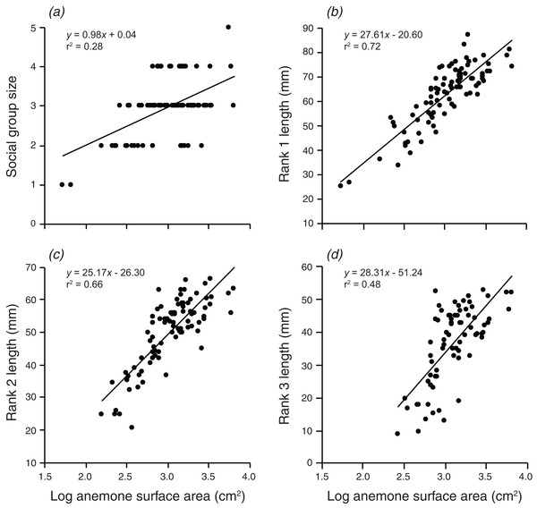 Relationships between log anemone surface area and (A) social group size, (B) rank 1 length, (C) rank 2 length, (D) rank 3 length.