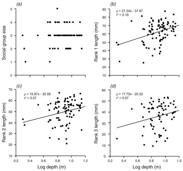 Relationships between log depth and (A) social group size, (B) rank 1 length, (C) rank 2 length, (D) rank 3 length.
