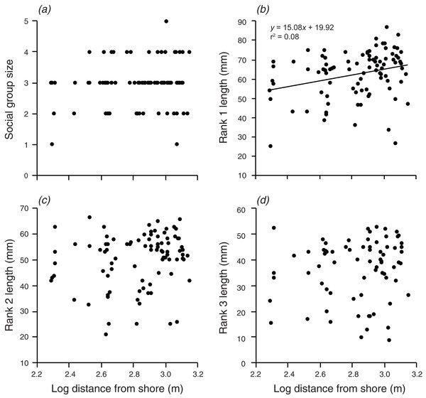 Relationships between log distance from shore and (A) social group size, (B) rank 1 length, (C) rank 2 length, (D) rank 3 length.