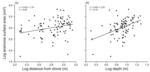 Relationships between log anemone surface area and (A) log distance from shore, and (B) log depth.