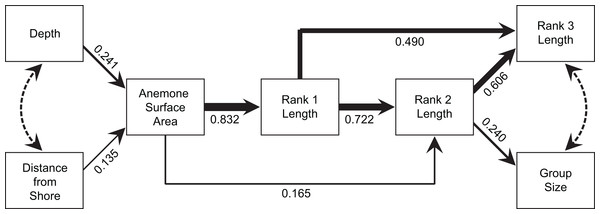 Path analysis showing the influence of environmental and social variables on social group size and structure.