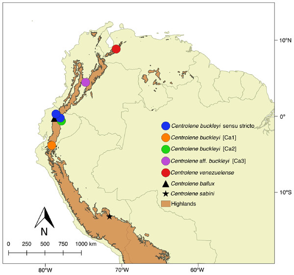 Distribution of Centrolene buckleyi species complex. Centrolene buckleyi sensu stricto (KU 178031 Imbabura province, Ecuador and MZUTI 763 Napo province, Ecuador, blue circles); C. buckleyi [Ca1] Shucos, Zamora province, Ecuador (orange circle); C. buckleyi [Ca2] Yanayacu, Napo province, Ecuador (green circle); C. aff. buckleyi [Ca3] MAR 371 Chingaza National Park, Cundinamarca, Colombia (purple circle); C. venezuelense EBRG 5244 Páramo de Maraisa, Mérida, Venezuela (red circle). C. ballux in Ecuador (black triangle) and C. sabini in Peru (black star).