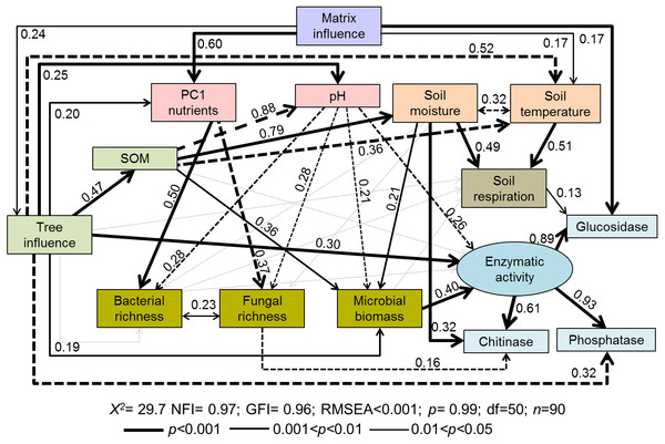 Path diagrams representing hypothesized causal relationships among the tree influence (proxy by tree size), biotic and abiotic variables, soil respiration and soil enzymatic activity (indicated by β-glucosidase, chitinase, and phosphatase).