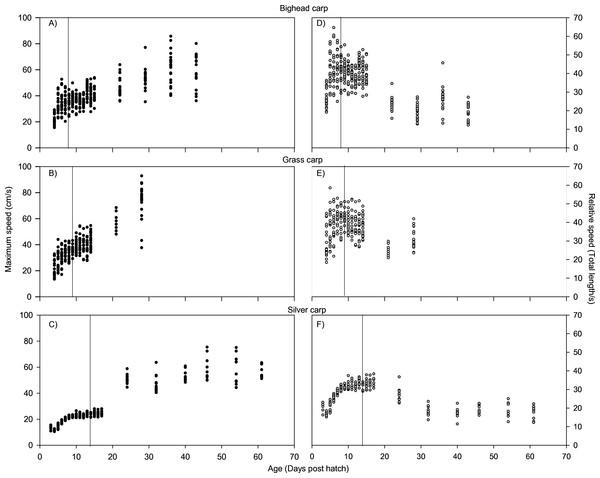 Maximum swimming speed of larval bighead, silver, and grass carp.