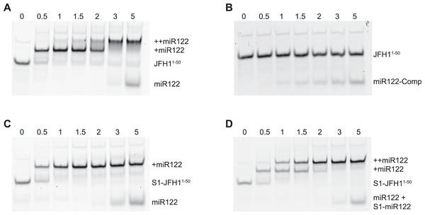 RNA-RNA electrophoretic mobility gel shift assays of miR122 binding to JFH-1 5′UTR.