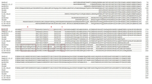 Multiple protein sequence alignment of SoGloI protein with glyoxalase I proteins from other species.