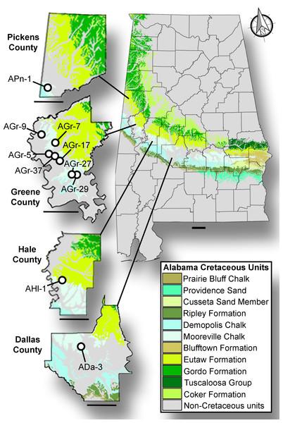 Surface stratigraphy of Alabama Prionochelys matutina localities.