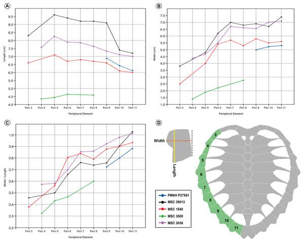 Prionochelys matutina peripherals 3–11 growth metrics.