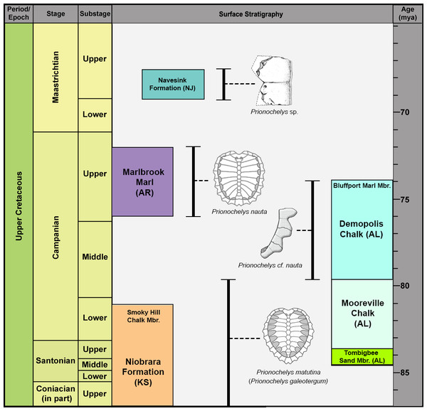 Stratigraphic occurrence of Prionochelys.
