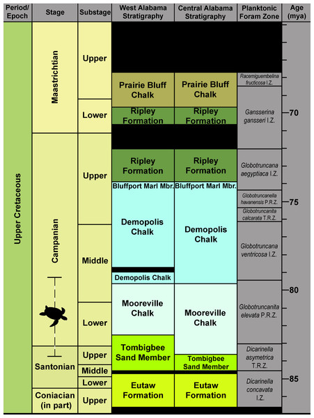 Generalized Santonian through Campanian surface stratigraphy of western and central Alabama.