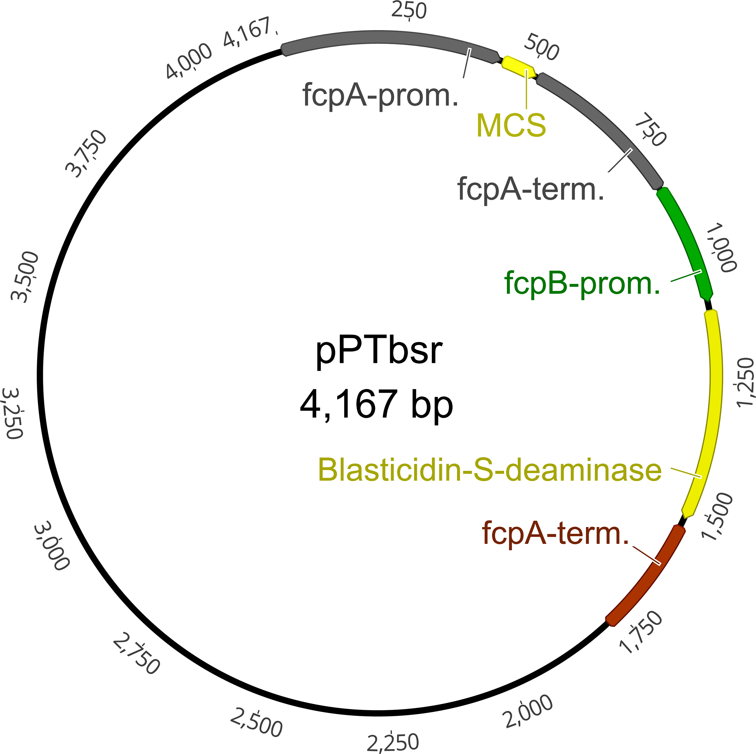 Blasticidin-S deaminase, a new selection marker for genetic