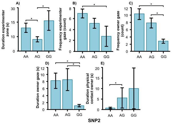Associations between SNP2 and behaviors in golden retrievers.