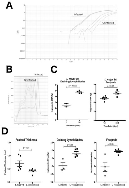 DRBD3 primers are able to assess parasite burden from infected mouse tissue.