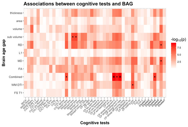 Heatmap of the association between cognitive scores and brain age gaps.
