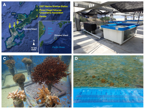 Location, outdoor tank, and coral colonies.