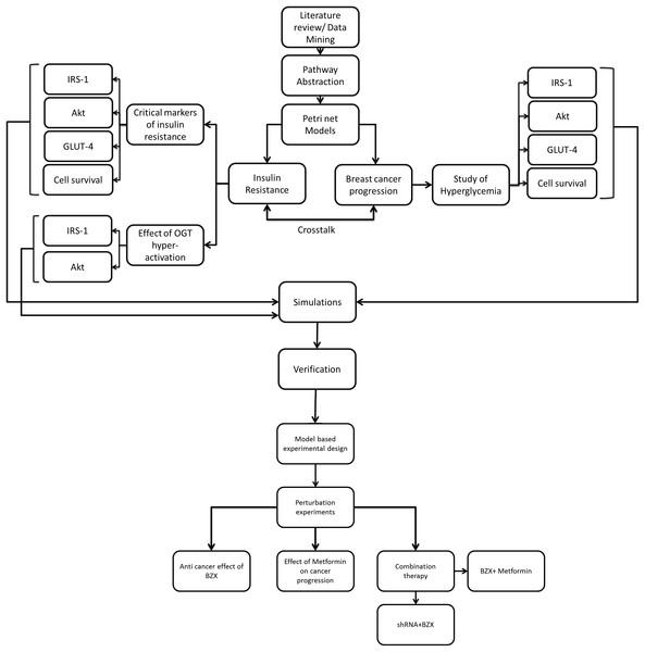 Flowchart explaining model-based study design.