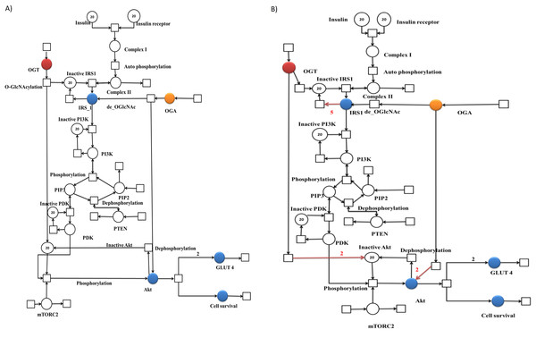 Illustration of the PN models representing altered PI3K/Akt pathway during normal and insulin resistance.