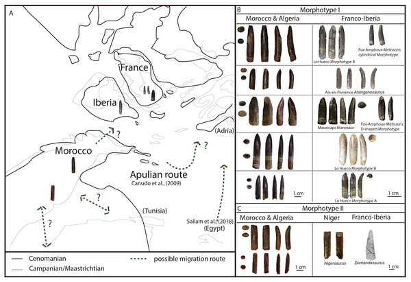 Palaeobiogeographical reconstruction of northwest Africa and southern Europe using sauropod tooth morphotypes.