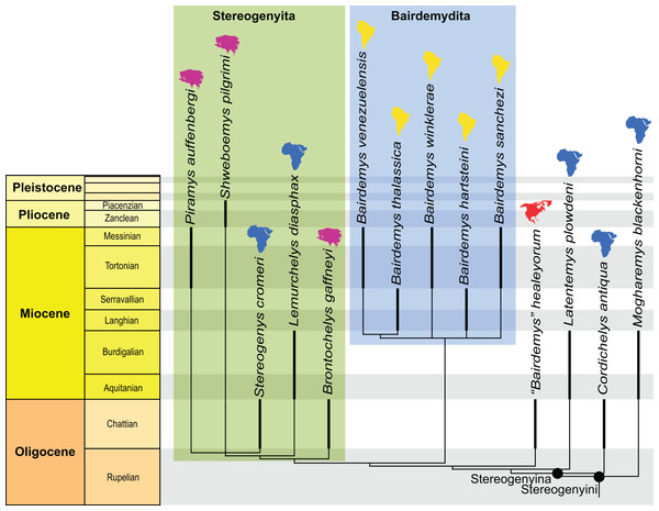 Phylogenetic hypothesis of Stereogenyina.