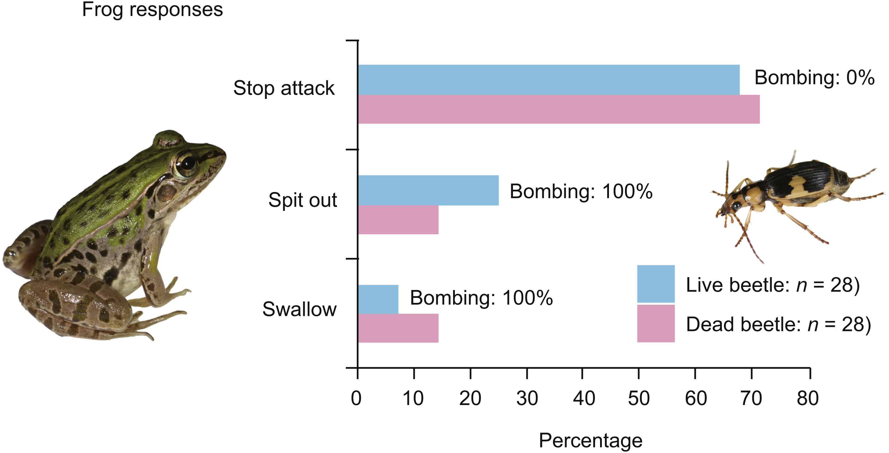 Anti-predator defences of a bombardier beetle: is bombing essential for  successful escape from frogs? [PeerJ]