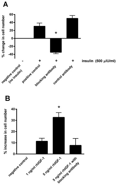 The effect of a blocking antibody on the proliferative response to insulin or IGF-1 in cultured equine lamellar epithelial cells.