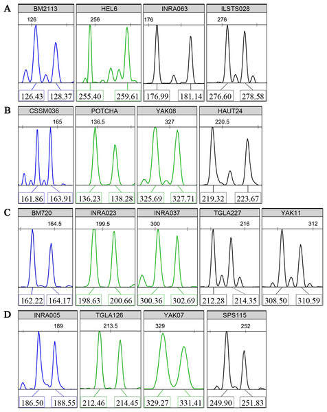 Typical fluorescence signal s of detections for the core 17 microsatellite loci.