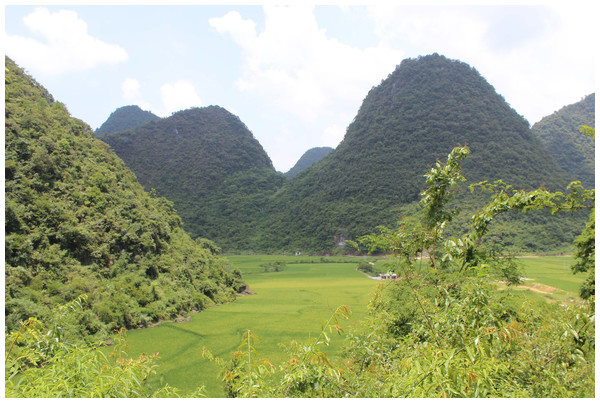 Typical karst terrain of Maolan National Nature Reserve.