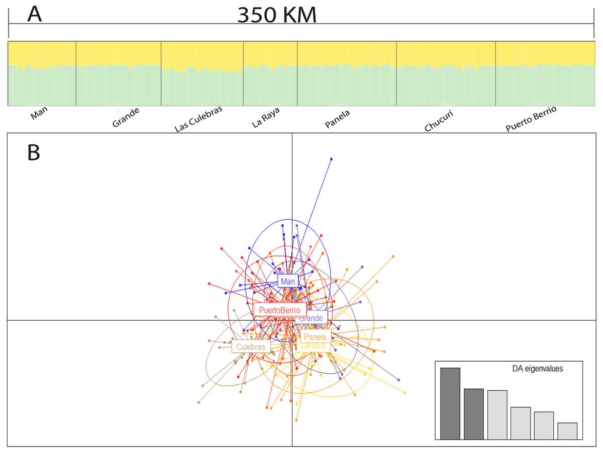 Microsatellite loci development and population genetics in