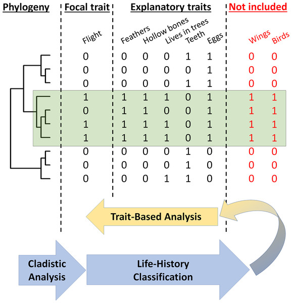 Cladistic analyses complement and refine trait-based analyses of viral zoonotic potential.