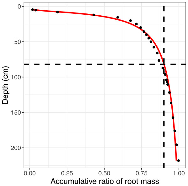 The simulated accumulative ratio of the root biomass.