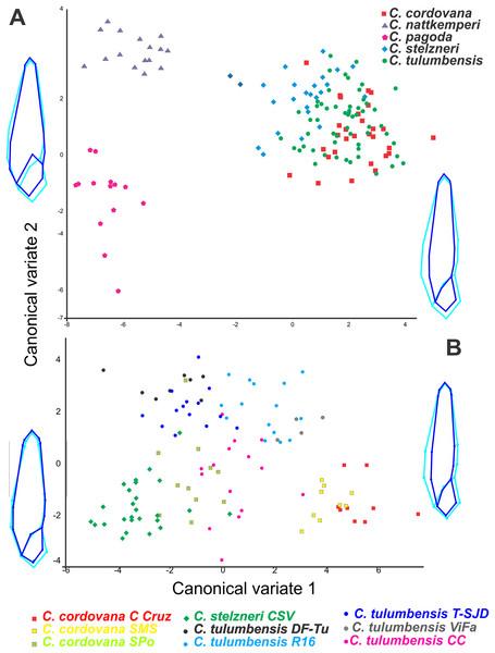 Geometric morphometric analyses.