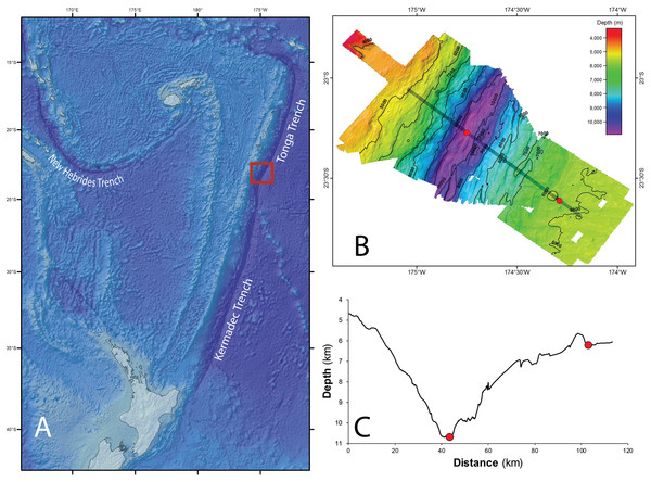 Tonga Trench Study site in the Southwest Pacific Ocean.