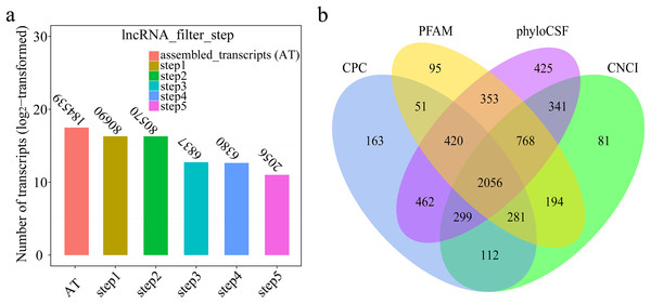 (A) Transcripts number of each step in filtering lncRNAs; (B) Venn diagrams of coding potential analysis by four tools.