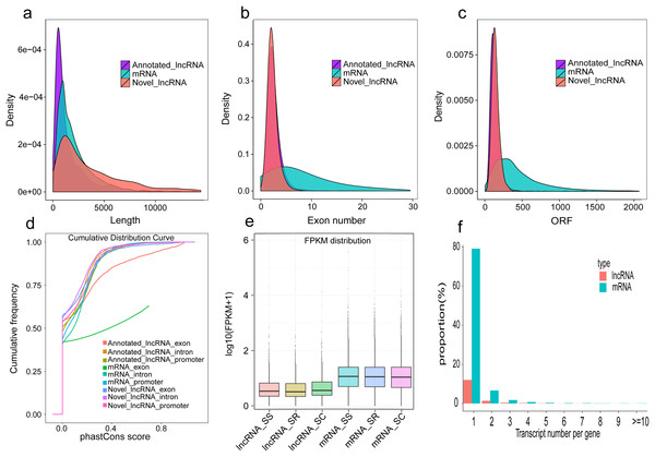 Comparison of genomic features in lncRNAs and mRNAs.
