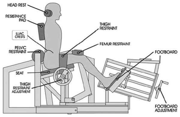 Restraint system for the MedX Isolated lumbar extension machine.