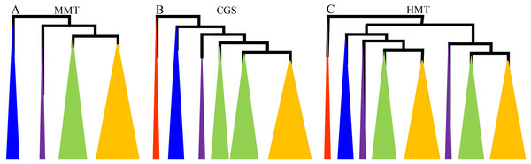 The diagrams of the evolutionary relationships of CGS, HMT and MMT gene families.