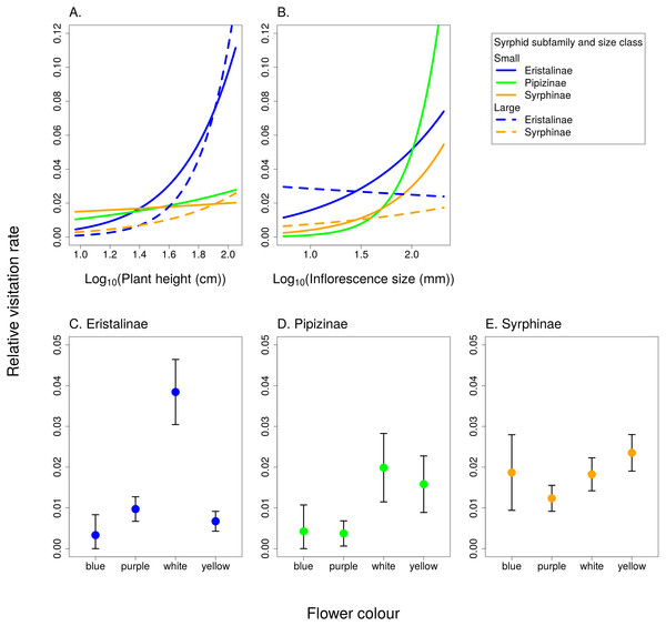 The effect of species traits on flower visitation by Syrphidae.