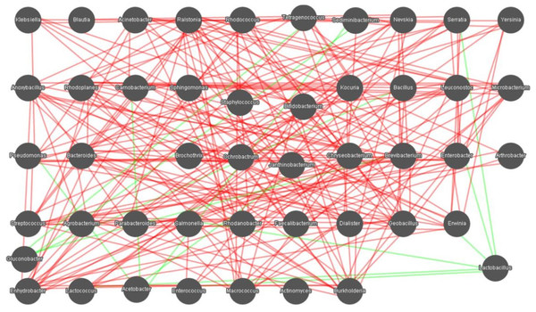 Networks of microbial interaction in the samples.