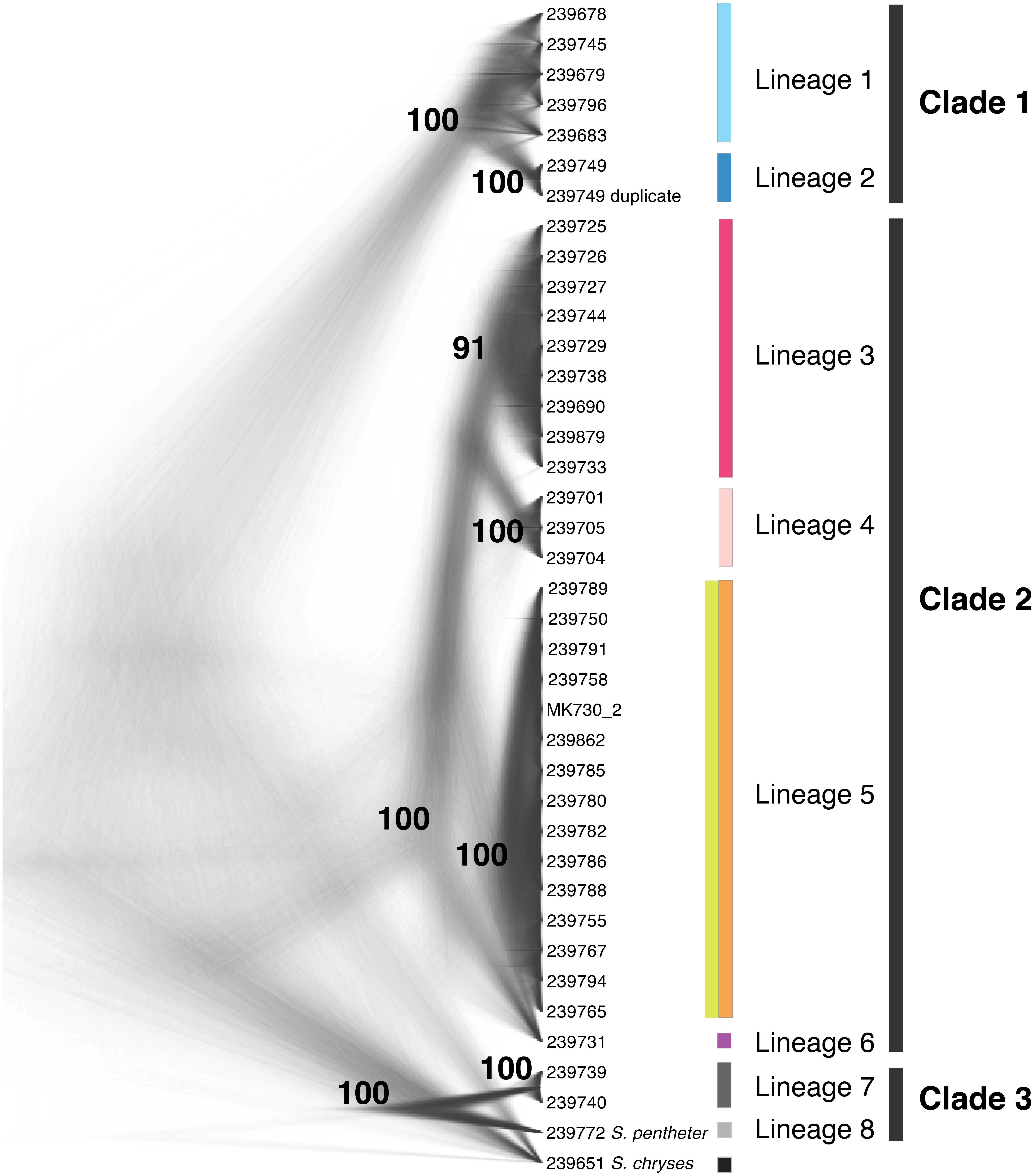 Combining ultraconserved elements and mtDNA data to uncover
