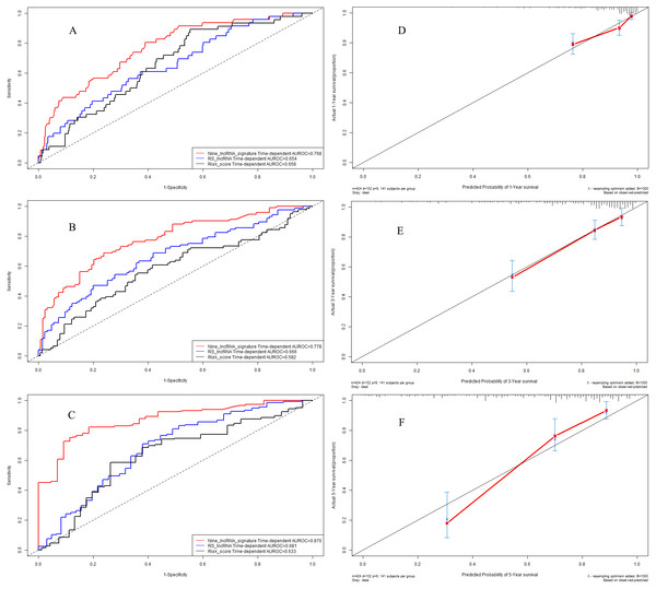 Performance of nine-lncRNA prognostic signature in model cohort: Time-dependent receiver operating characteristic curves of three prognostic models according to 1-year (A), 3-year (B) and 5-year (C) overall survival. (D) Calibration curve for 1-year overall survival; (E) Calibration curve for 3-year overall survival; (F) Calibration curve for 5-year overall survival.