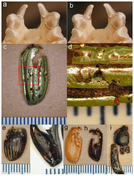 Stereopair of bat teeth and insect fragments.