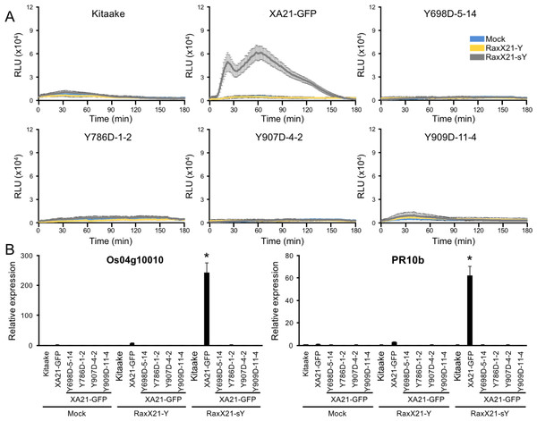 XA21YD-GFP variants do not respond to sulfated RaxX.